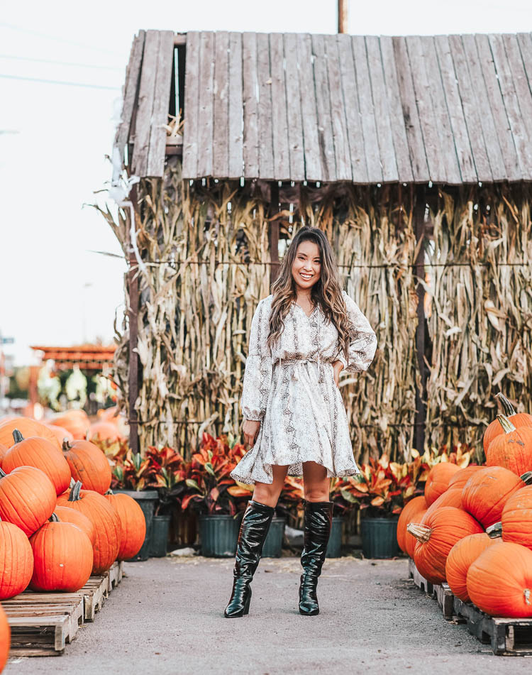 cute & little | popular dallas fashion blog | gibson snakeskin print dress, dsw crocodile print lyla black knee high boots | fall dressed up outfit | The Snakeskin Print Trend Is Here: How-To Style by popular Dallas petite fashion blog, Cute and Little: image of a woman in a pumpkin patch wearing a Nordstrom Gibson x City Safari Tara Gibson Tie Neck Satin Dress, DSW BLEECKER & BOND LYLA BOOT, and Kendra Scott Keerti Statement Earrings In Bright Silver.