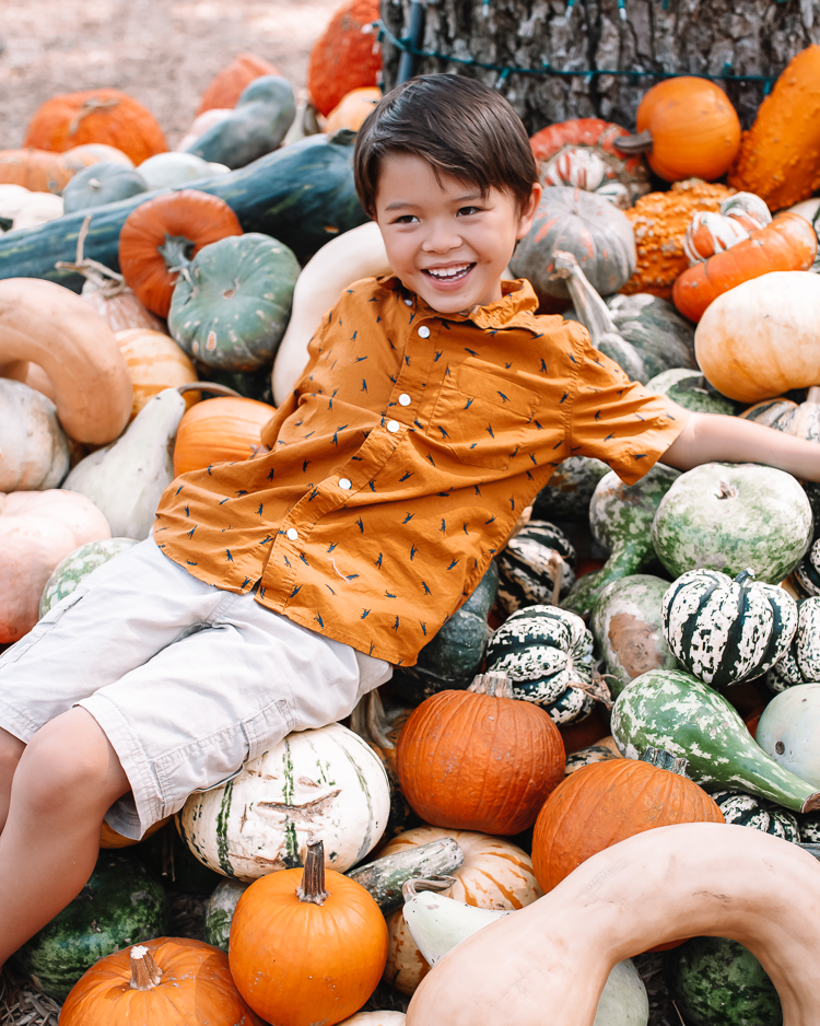 cute & little | dallas fashion blogger | fall coordinating family photo outfit ideas | dallas arboretum pumpkin patch village |Family Outfits by popular Dallas petite fashion blog, Cute and Little: image of a boy sitting in a pile of pumpkins and wearing a orange button up shirt and The Children's Place Boys Pull-on Cargo Shorts.